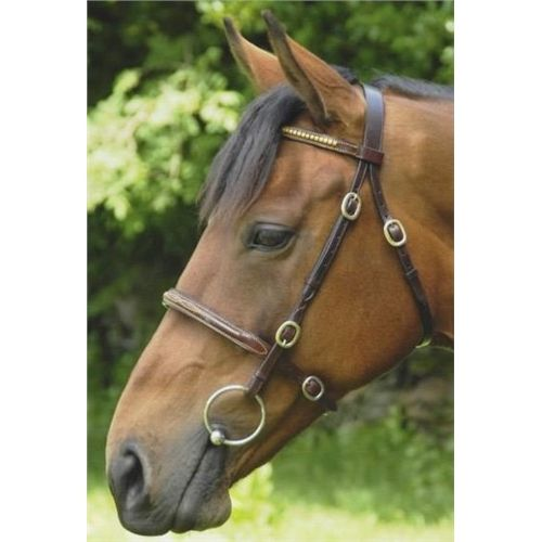 Celtic Equine In-hand Bridle - Brass Browband