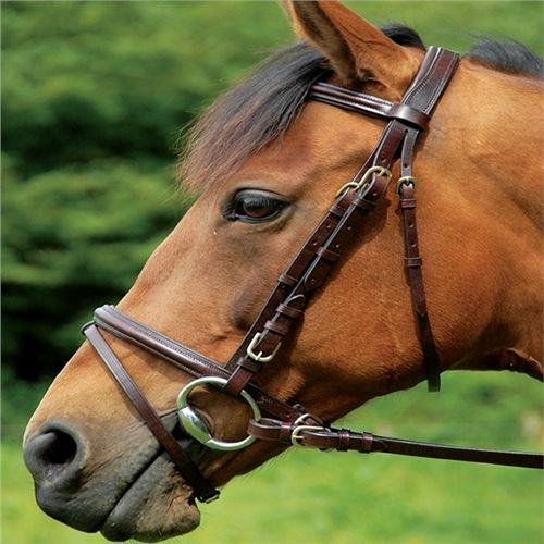 Celtic Equine Comfort Flash Bridle