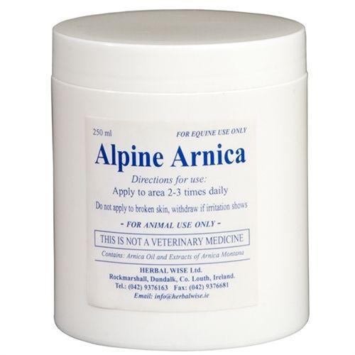 Alpine Arnica