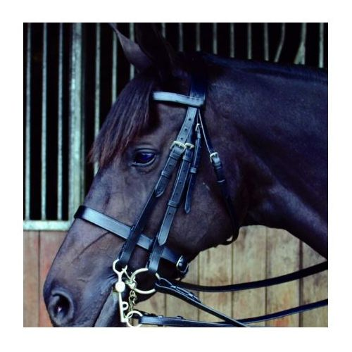 Celtic Equine Double Bridle