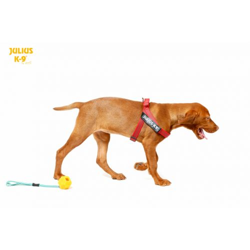 Julius K9 IDC Powerharness